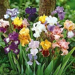 north texas association management, flowers, hoas, best hoa